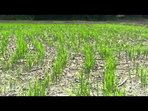 Using Farm Mechanization to Strengthen the Rice Value Chain