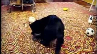 Смотреть онлайн Неравная схватка кота и горностая