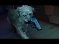 Download Video Dog Wick
