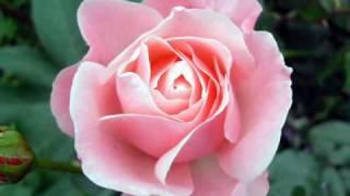 Acker Bilk - La Vie en Rose.wmv