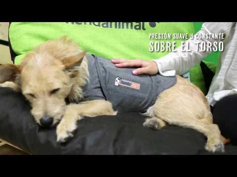 Camiseta antiansiedad para perros - Tiendanimal