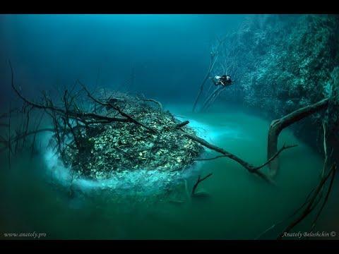 """Cenote Angelita: """"Underwater River"""""""