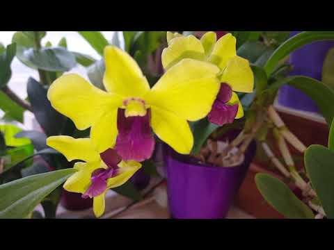 Прекрасные орхидеи и Анонс предстоящего цветения!