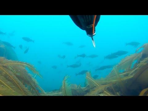 Мурманская область, Териберка: рыбалка на треску, подводная охота, водопады