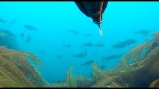 Рыбалка на баренцевом море летом