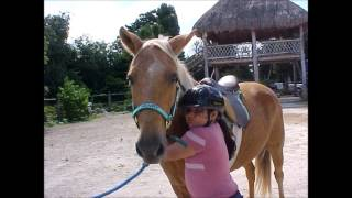 HEAL A HORSE COZUMEL SANCTUARY