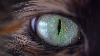 Video RP - Animals (video 2021)