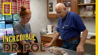 Kiwi's Last Call | The Incredible Dr. Pol