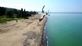 Реакция чайки на дрон!