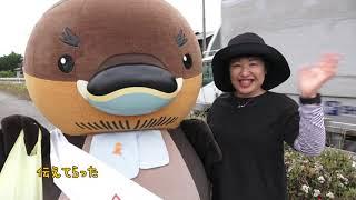 2019/09/03放送・知ったかぶりカイツブリにゅーす