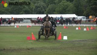 preview picture of video 'Gilles Pirotte - MANIABILITE  FEI - WIENER NEUSTADT 2012'