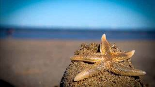 Rico Puestel - Starfish