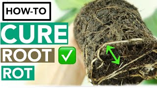 How to Get Rid of Root Rot with Household Items   Houseplant How-to Ep. 10