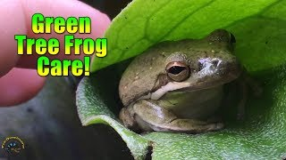 🐸 How to Take Care of A Green Tree Frog! 🐸