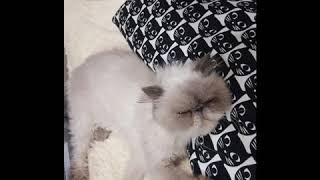 Приколы с котами  Приколы с котятами  Приколы с кошками  Смешные коты и кошки