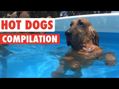 Funny Hot Dogs Video Compilation 2016