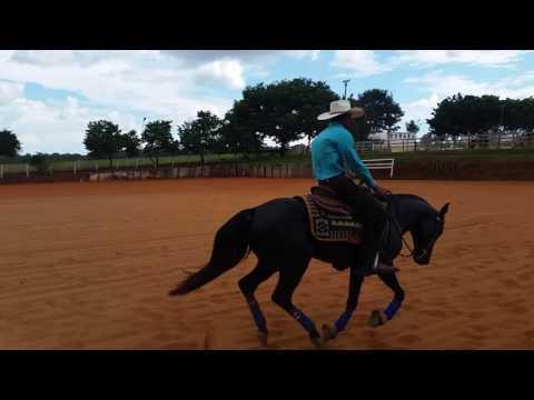 Prova de rédea em Bela Vista de Goiás - Wilson Junio e Pavão da Boa Esperança- Firminopolis Goiás
