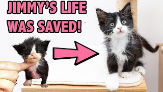 Saving a Sick and Starving Kitten - How Supportive Care Saved Jimmy