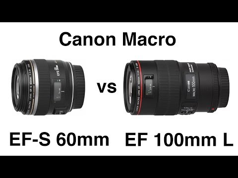 Best Macro Lenses for Canon SLR | Canon Macro Lens Comparison | Canon Macro Lens Review