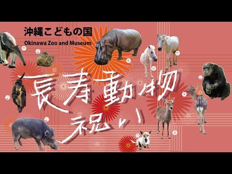 沖縄こどもの国長寿動物祝い