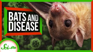 Why Do Bats Carry So Many Dangerous Diseases?
