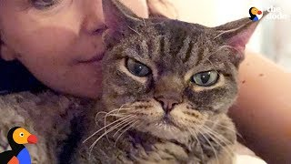 Aggressive Cat Shocks Mom By Becoming A Snugglebug - BARBARA | The Dodo