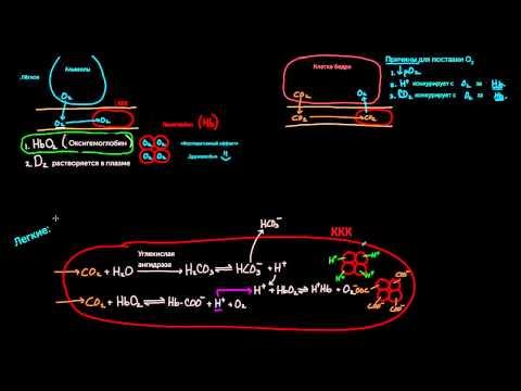 Рентгенологические исследования печени и желчевыводящих путей