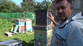 """Хотите завести пчел, но нет денег..... Часть №3 """"Снятие роев"""""""