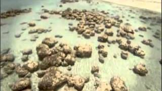 Hitchens - The Indifference of Heaven.flv