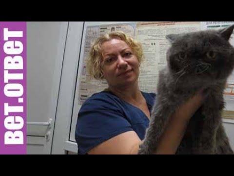 Почему не помогает лечение ветеринара. Почечная недостаточность