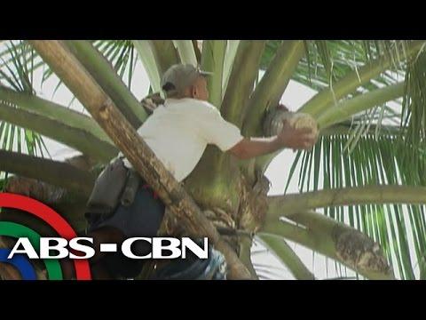 Kung ano ang mga bitamina na kailangan mo sa pag-inom mula sa malubhang pagkawala ng buhok