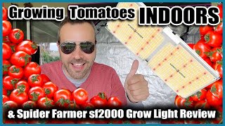 GROWING VEGETABLES INDOORS  // Tomatoes and LED Grow Light Review