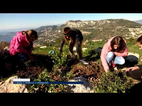Telethon: Reforestation in La Turbie
