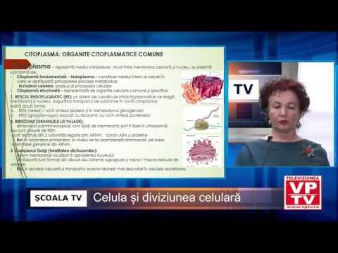 ȘCOALA TV – Biologie – Celula și diviziunea celulară