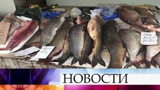 Места для ловли рыбы в волгограде