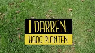 Haag met blote wortels planten in 10 stappen