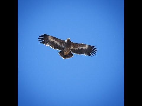 eagle-kills-dji-mavic-pro-drone