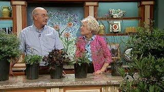 Making It Grow - South Carolina Native Plants