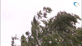 До конца дня в Новгородской области будет бушевать шквалистый ветер