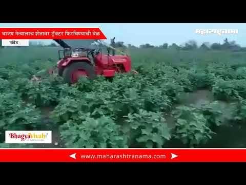BJP former MP destroying his own 5 acre farm