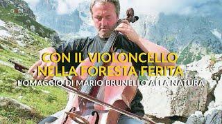 """Con il violoncello nella """"Foresta degli Stradivari"""" distrutta dal vento: l'omaggio di Mario Brunello"""