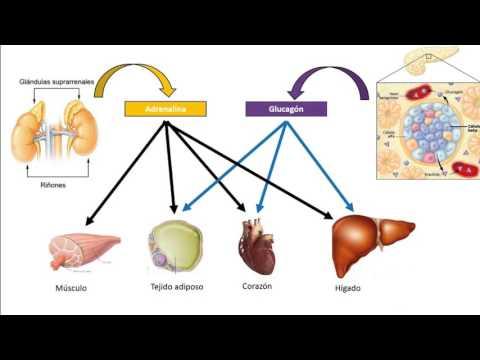 Lo que debe ser el azúcar en sangre en los diabéticos tipo 2