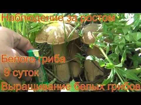 Гельминты передающиеся с рыбой