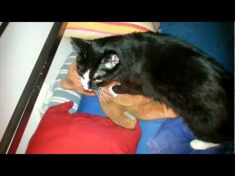 Katze massiert Teddy
