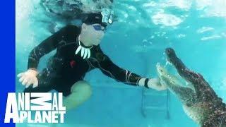 Unwelcome Gator Takes a Dip in Family Pool | Gator Boys