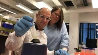 Major Breakthrough in Zika Virus Research