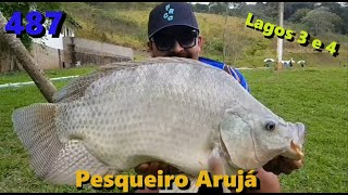 As Tilápias e Carpas do Pesqueiro Arujá - Fishingtur na Tv 487
