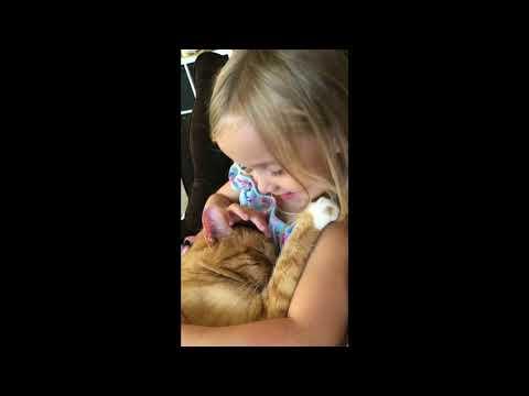 ילדה מתוקה שרה שיר ערש לחתול שלה