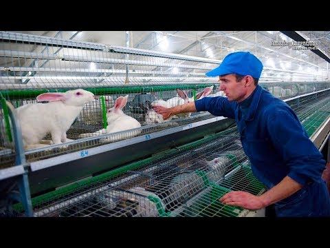 , title : 'Intelligent Technology for Rabbit Farm Amazing Technology for Agriculture Modern Farm for Rabbits