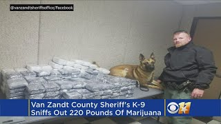 K-9 Sniffs Out Over 200 Pounds Of Marijuana After Traffic Stop
